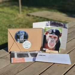 3 months chimp adoption gift