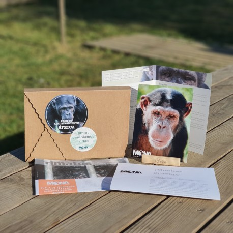 Regala el apadrinamiento de un chimpancé por 3 meses